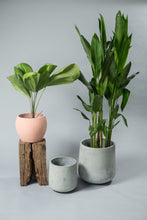 Load image into Gallery viewer, Volta Planter - thecrio