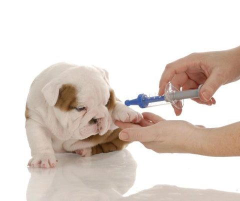 Bully-Shop.com Vaccination Chien