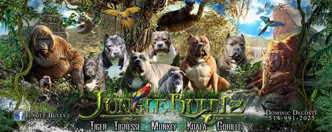 Eleveur Bully Dominic Decoste Jungle Bullyz Canada Quebeq