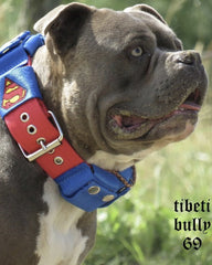SUPER BULLY Collar Muscle Builder; Collier d'entrainement musculaire Bully-Shop.com