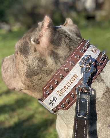 "Colliers en cuir pour American Staffordshire Terrier ""MONSTER"" collier véritable Cuir"