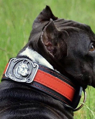 "Bully-Shop.com ""SLEEN"" Collier Cuir PIT BULL Fabrication Artisanale"