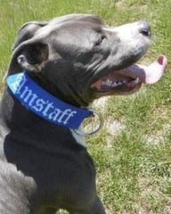 "Bully-Shop.com ""AMSTAFF"" Collier Polyester"