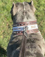"Bully-Shop ""MONSTER"" Collier Cuir Haute gamme Personnalisable pour AMSTAFF"