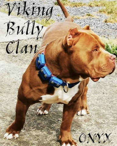 SUPER BULLY Collier de Musculation