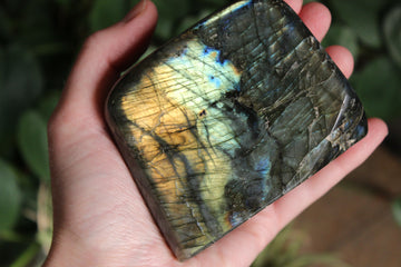 Petrified wood pocket stone 1