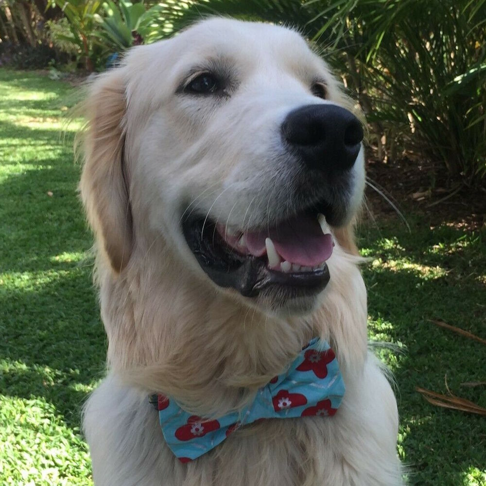 "Handmade Dog Bow Tie, ""Aqua/Red Flowers"""