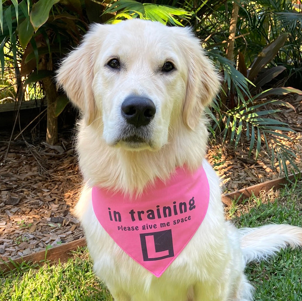 """In Training Please Give Me Space - L Plate"" Handmade Dog Bandana - Plain Pink"