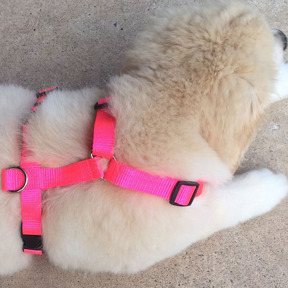 20mm Gentle Harness Puppy / Small Dog, Heavy Duty Polyester Webbing - Choice of Colour