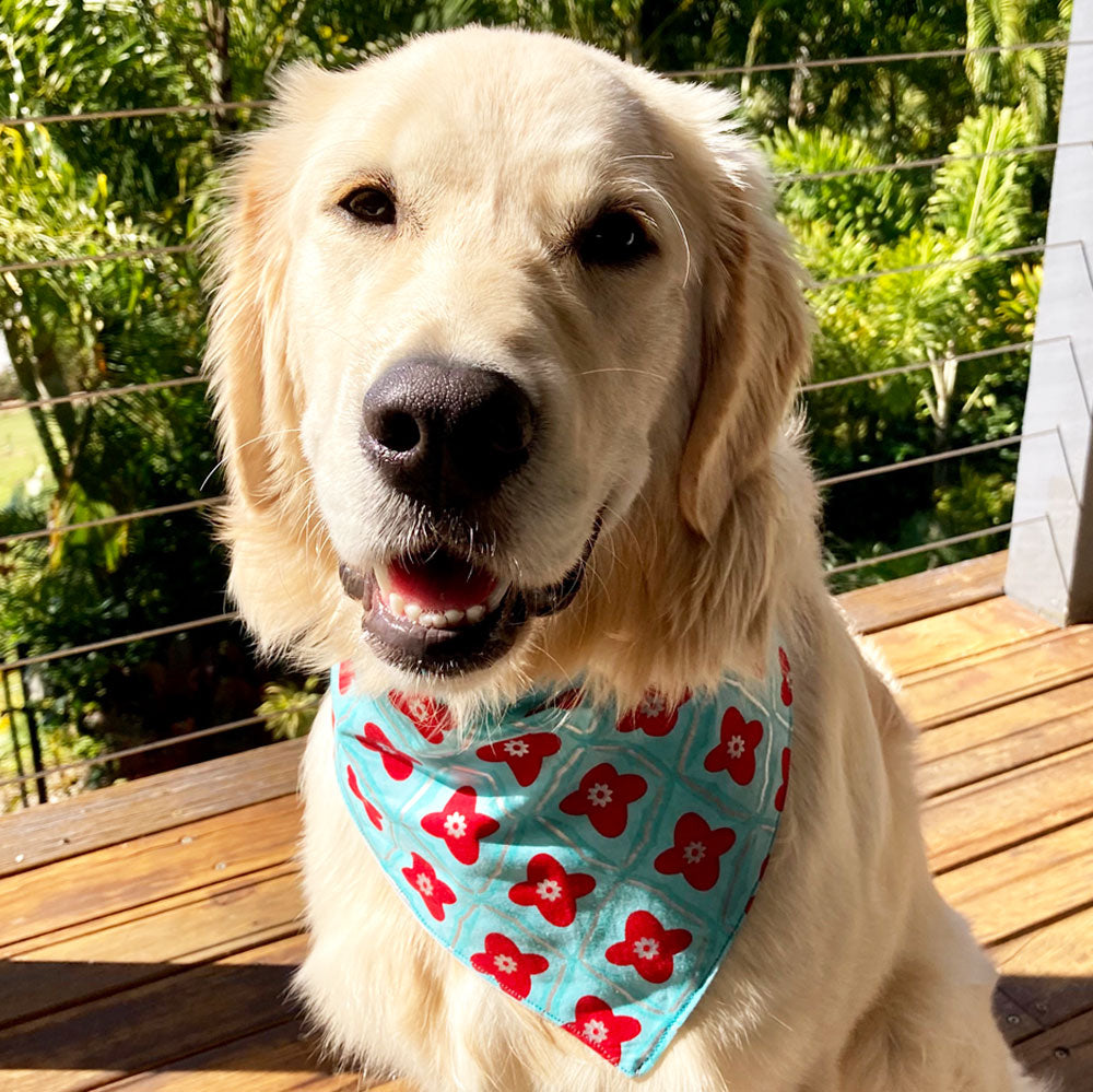 "Xmas Dog Tie On Bandana, ""Jade/Red Floral"""