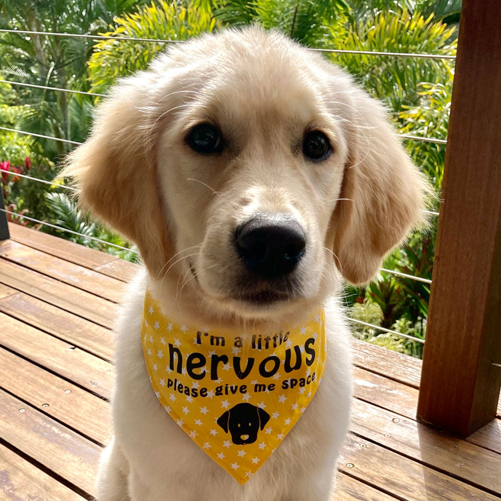 """NERVOUS DOG Bandana and Lead/Collar Strap Set"" - Yellow Stars"