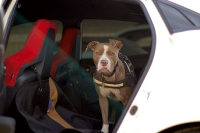 Over 20 Million Dogs in the U.S. Travel without Proper Safety Restraint