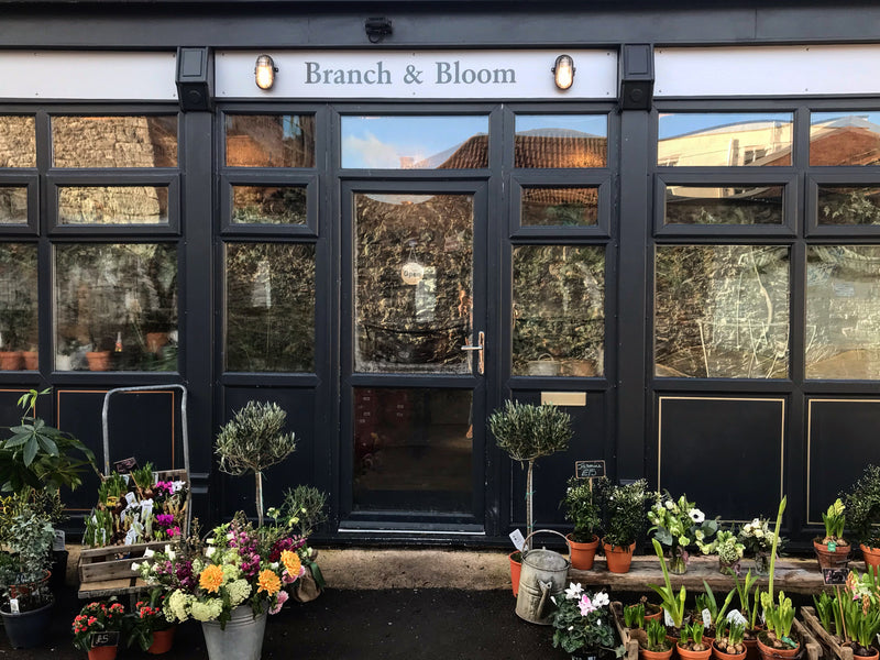 About Branch and Bloom