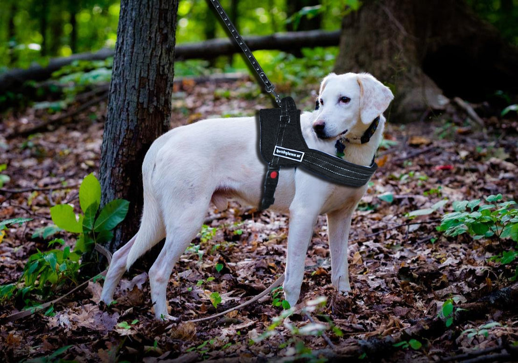 FreeRoam™ - No Pull Dog Harness