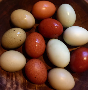 Pasture Produced Free Range Chicken Eggs