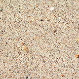 Fox Sand Beach Shell Rubber Mat Floor for Photography