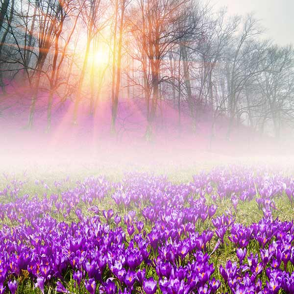 Spring Scenery Sunshine Through Trees And Purple Flowers Vinyl Printed Backdrop for Photography