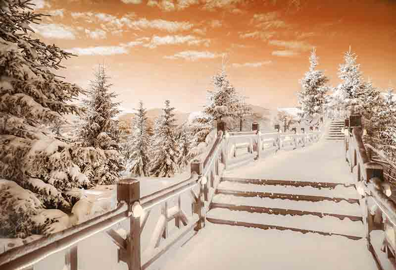 Fox Rolled Winter Snow Bridge Trees Vinyl Backdrop