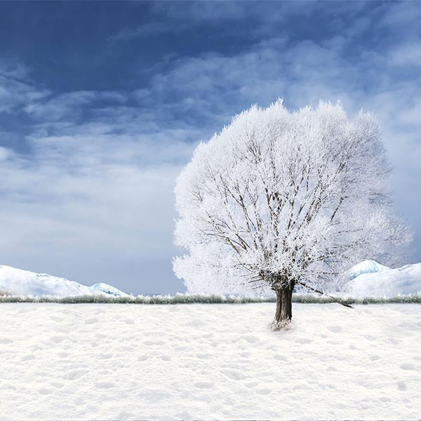 Fox Rolled Winter Snow Trees Vinyl Photos Studio Backdrop-Foxbackdrop
