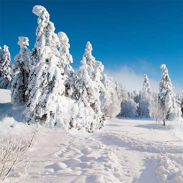 Fox Rolled Blue Sky Winter Snow Vinyl Photo Backdrop-Foxbackdrop