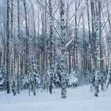 Fox Rolled Forest Winter Jungle Snow Vinyl Photo Backdrop-Foxbackdrop