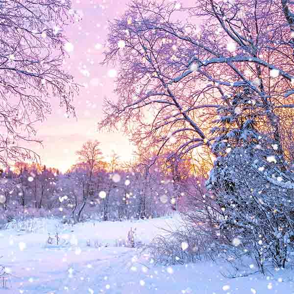 Fox Rolled Winter Snow Trees Vinyl Photo Backdrop-Foxbackdrop