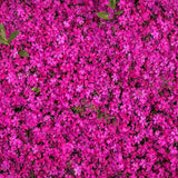 Load image into Gallery viewer, Fox Rolled Little Purple Flowers Vinyl Photos Backdrop-Foxbackdrop