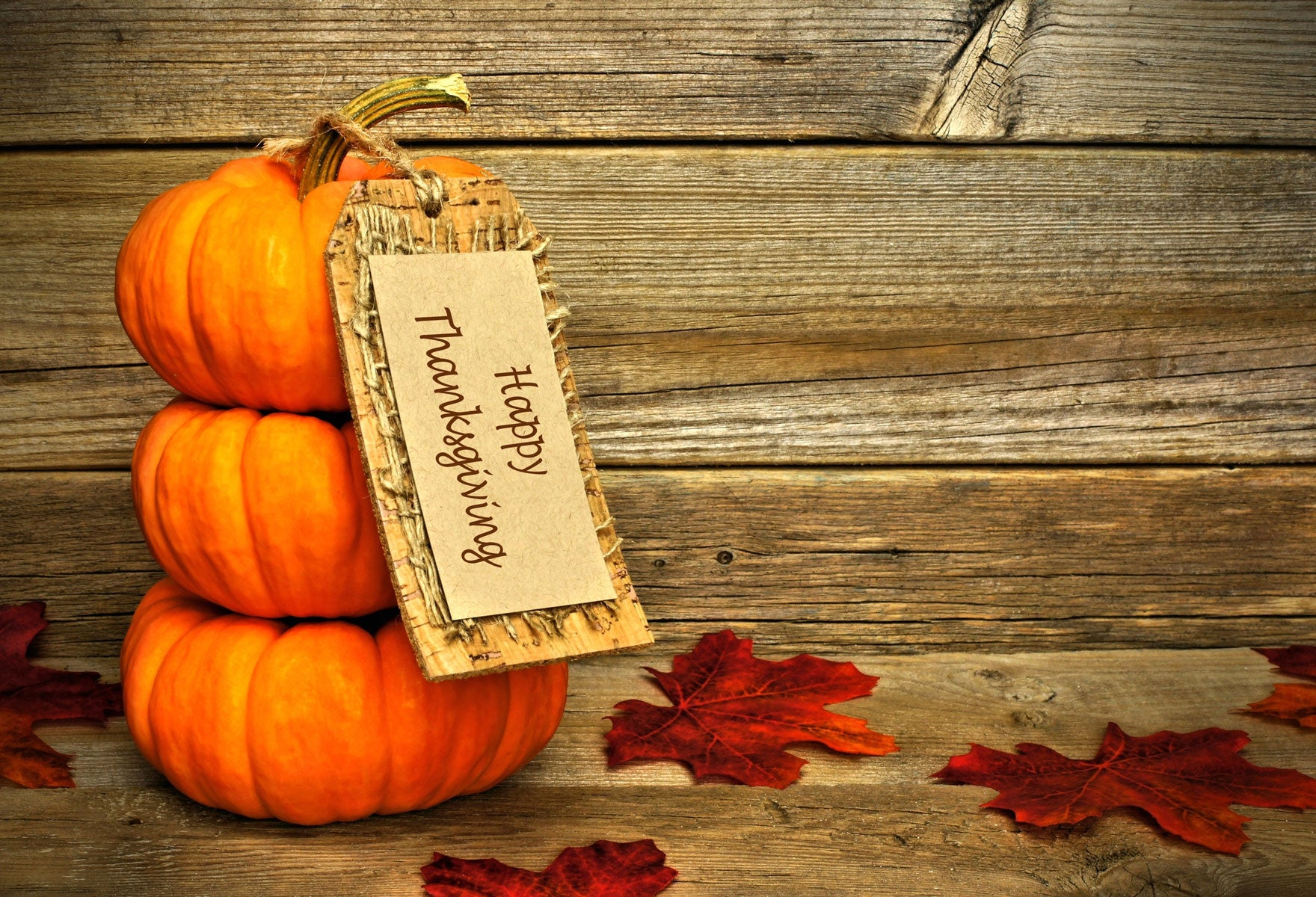 Fox Rolled Thanksgiving Day Wood Vinyl Backdrop-Foxbackdrop