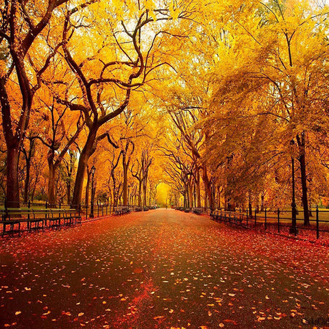 Fox Autumn Avenue Yellow Leaves Vinyl  Photos Backdrop
