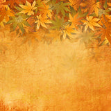 Fox Autumn Yellow Leaves Vinyl Photos Backdrop-Foxbackdrop
