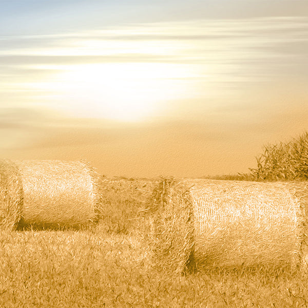 Fox Autumn Sunset Straw Vinyl Photos Backdrop