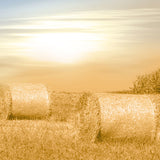 Fox Autumn Sunset Straw Vinyl Photos Backdrop-Foxbackdrop