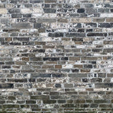 Fox Rolled Gray Brick Wall Vinyl Photo Backdrop