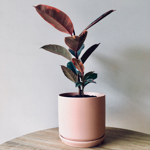 General Eclectic Medium Oslo Planter Peach