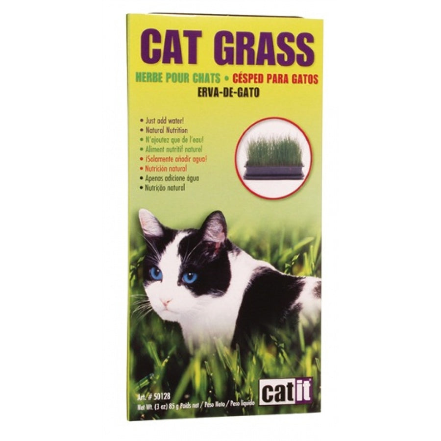 Cat It Cat Grass