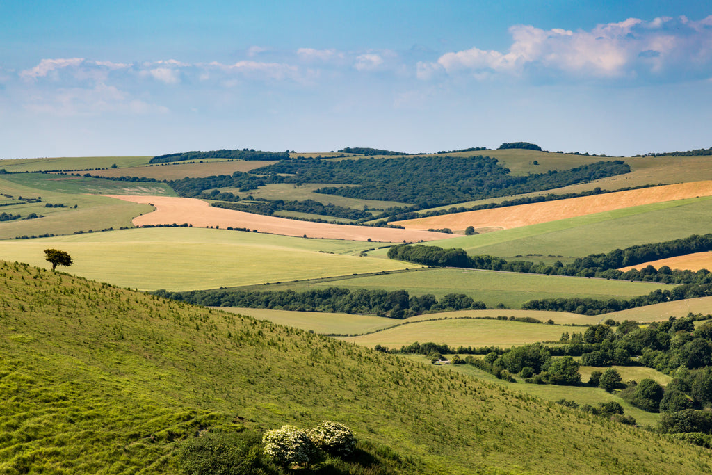 sussex-downs-view-fields-trees-sky
