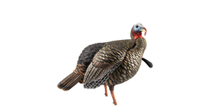 HDR Jake Turkey Decoy