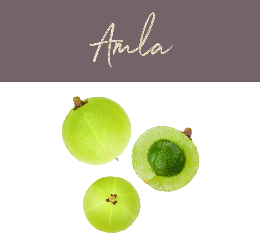 Amla Gooseberry - the super berry