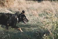 tactical dog vest harness for k9 german shepherd belgian malinois