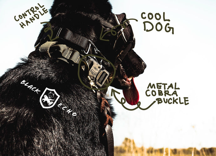 tactical black echo company honey badger dog collar durable