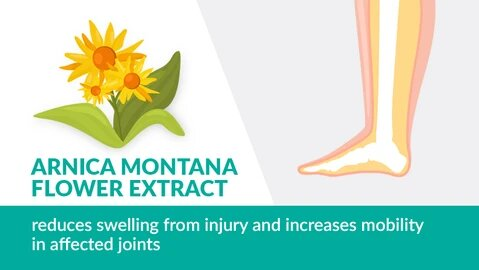 Arnica Flower Extract in Mountain Ice