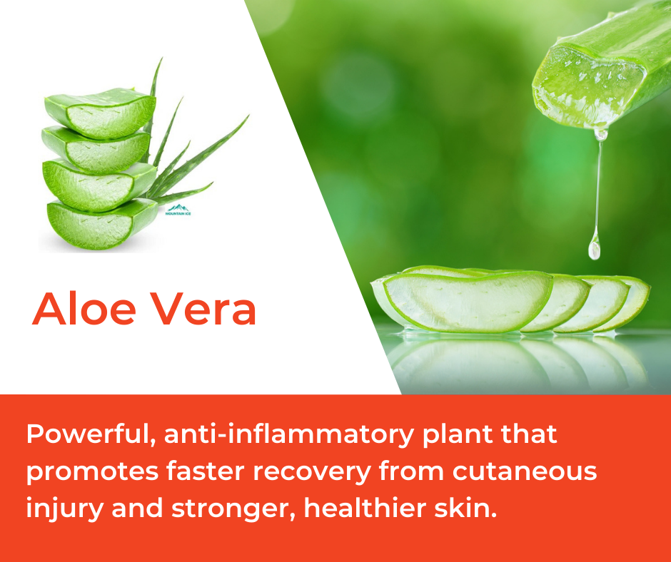Aloe Vera in Mountain Ice Muscle Therapy Gel