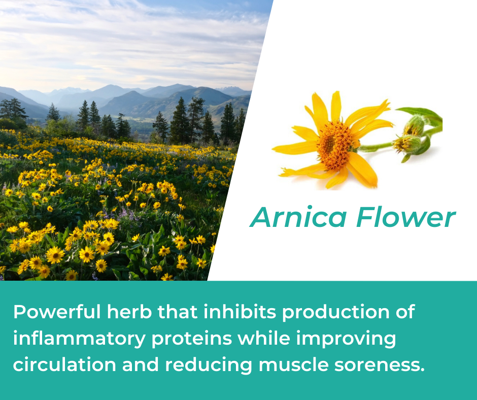 Arnica Flower in Mountain Ice Pain Relieving Gel