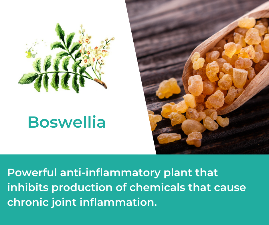 Boswellia for Mountain Ice Joint and Bone Health Complex