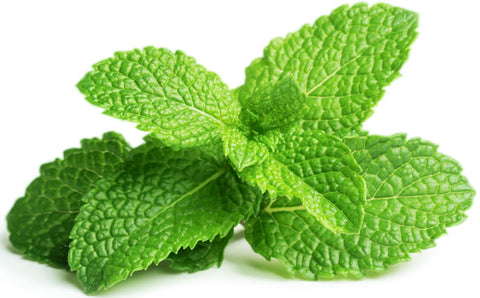 Menthol provides a cooling and numbing sensation to the skin, and prevents the pain from traveling to the central nervous system