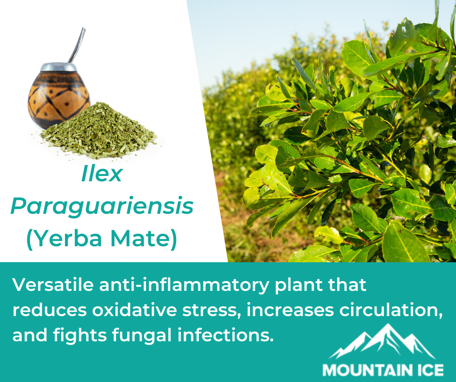 Yerba Mate in Mountain Ice Pain Relief Gel