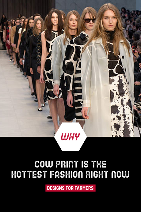 Why cow print is the hottest fashion right now