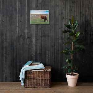 Grazing Cattle Canvas | Cow Loco