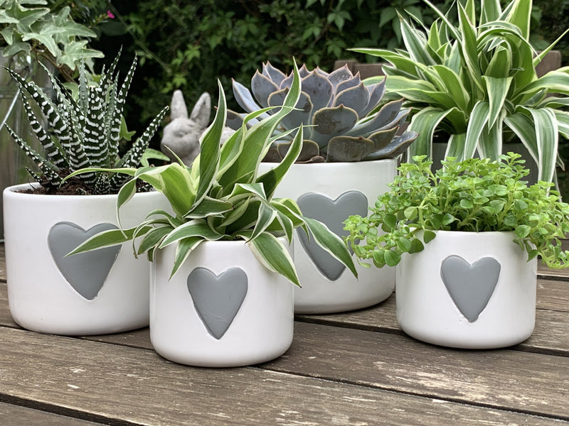 Gorgeous ceramic plant pots - hearts and stars