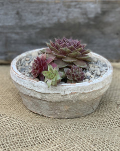 Antiqued Whitestone Cactus Dish Planter - Abigailshome